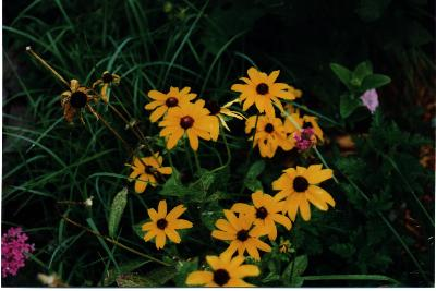 [image: native flowers]